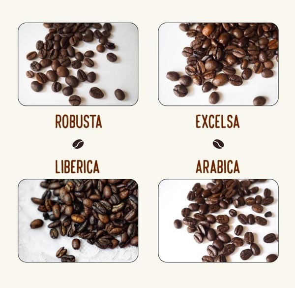 4-types-of-coffee-beans